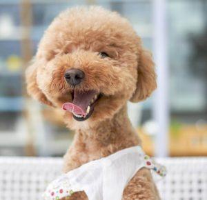 Singapore Pet Grooming